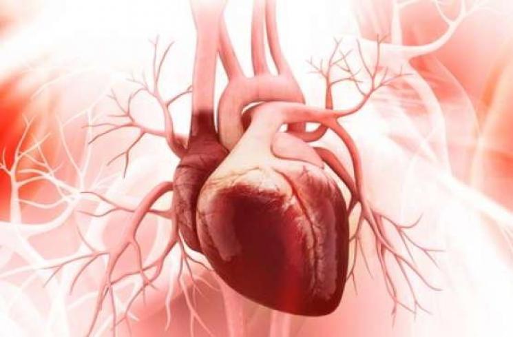 Ilustrasi anatomi jantung manusia (Shutterstock).